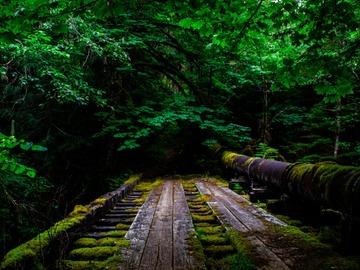 Adventure: OR   Photography   Memaloose & Clackamas Falls