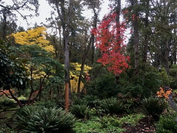 Adventure: OR | Hike | Forest, Native Plant, and Rhododendron Garden Hike