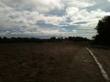Adventure: CA | Run | Trail Running in the Woods!